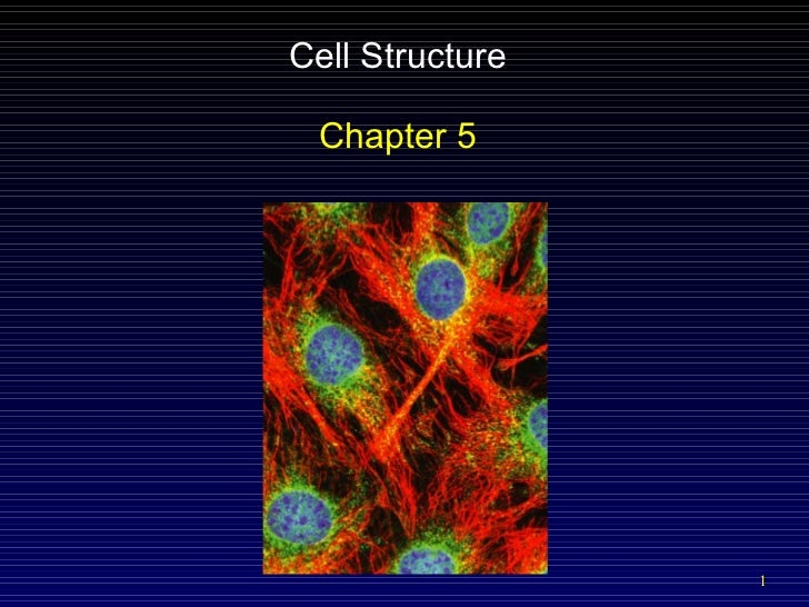 Cell Structure Chapter 5