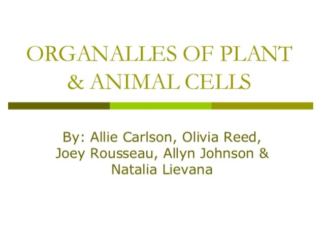 ORGANALLES OF PLANT & ANIMAL CELLS  By:  Allie Carlson,  Olivia Reed,  Joey Rousseau,  Allyn Johnson & Natalia Lievana
