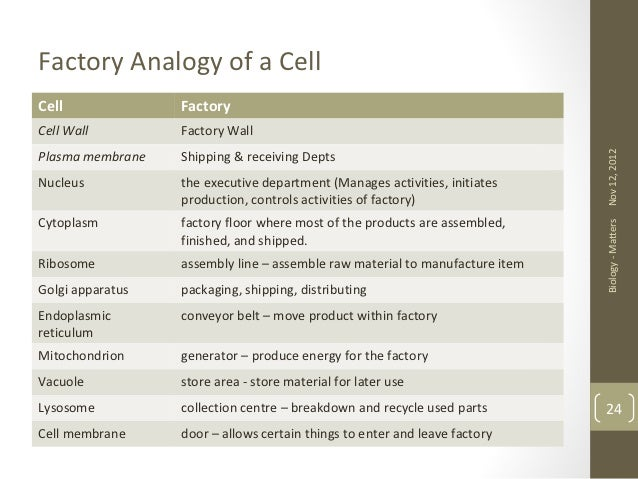 Cells Olevel Biology – Cell Analogy Worksheet