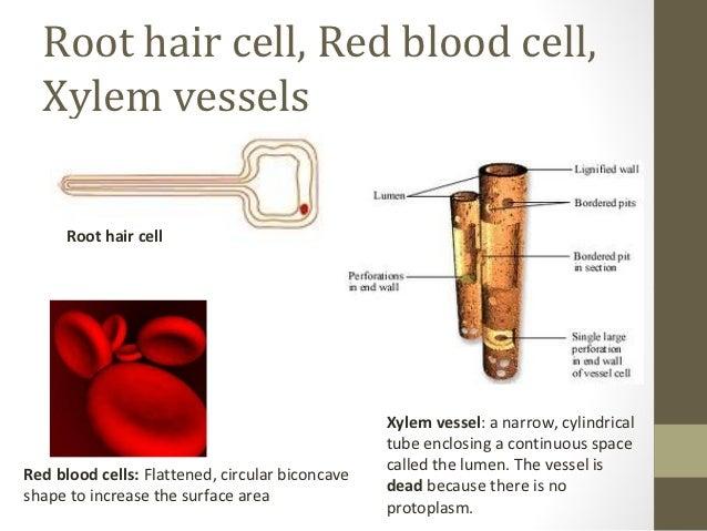 Cells Olevel Biology