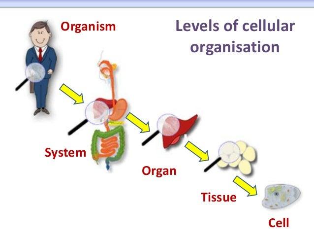 Cells on Ear Diagram Worksheet