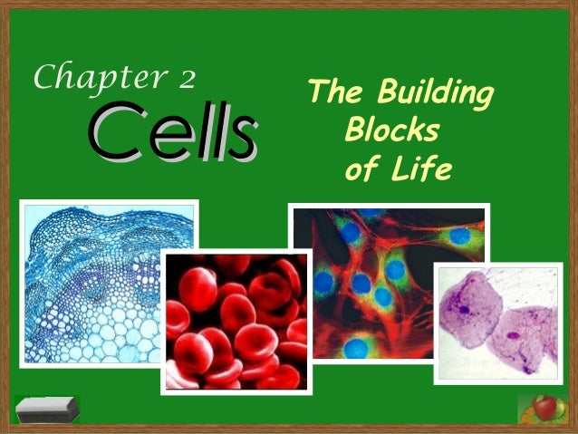 Chapter 2 CellsCells The Building Blocks of Life