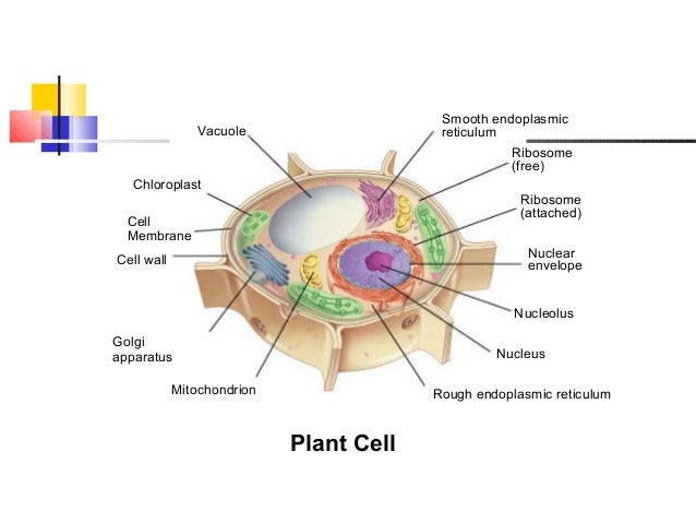 Unit 7 Protein Synthesis .pdf - Unit 7 Protein Synthesis ...