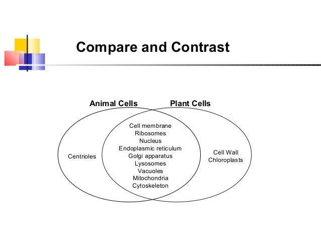 Venn Diagram Comparing Plant And Animal Cel Schematic Diagrams
