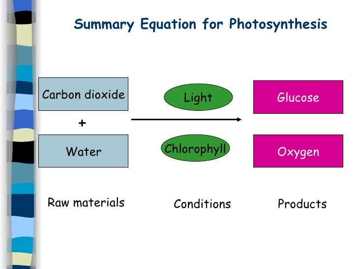 photosynthesis cells water equation summary dioxide carbon co2 chlorophyll