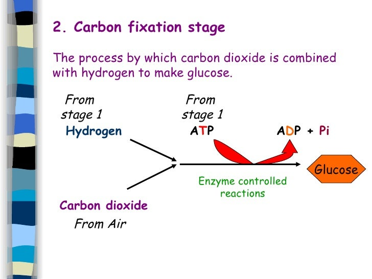 What is the process of carbon dating