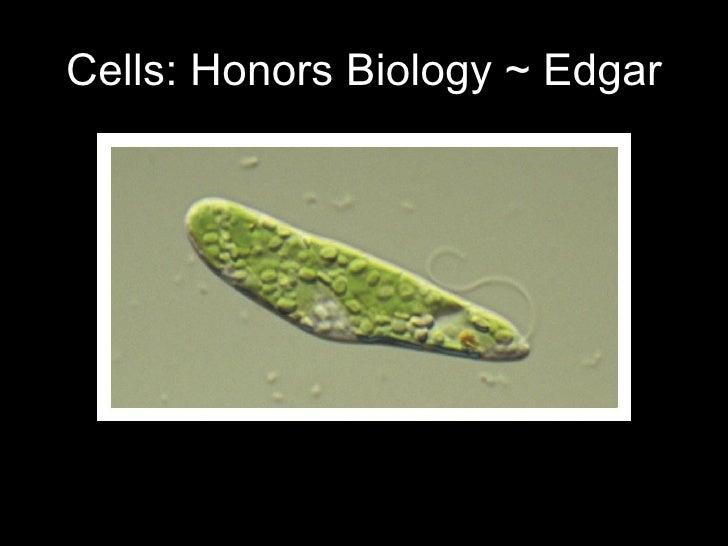 Cells: Honors Biology ~ Edgar