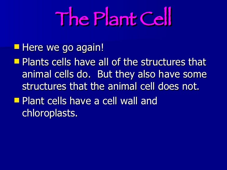 Cell Membrane Facts For Kids