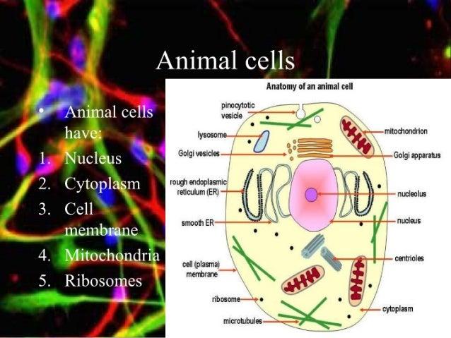 Cells[1] Slide 3