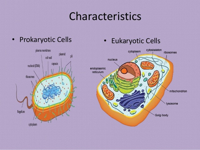 how to tell if cell is eukaryotic or prokaryotic
