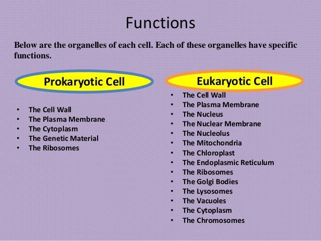 cell structures prokaryotic eukaryotic cells What are the structures found in eukaryotic cell  found in a eukaryotic cell, but the basic structures and  structures found in eukaryotic cells but not.