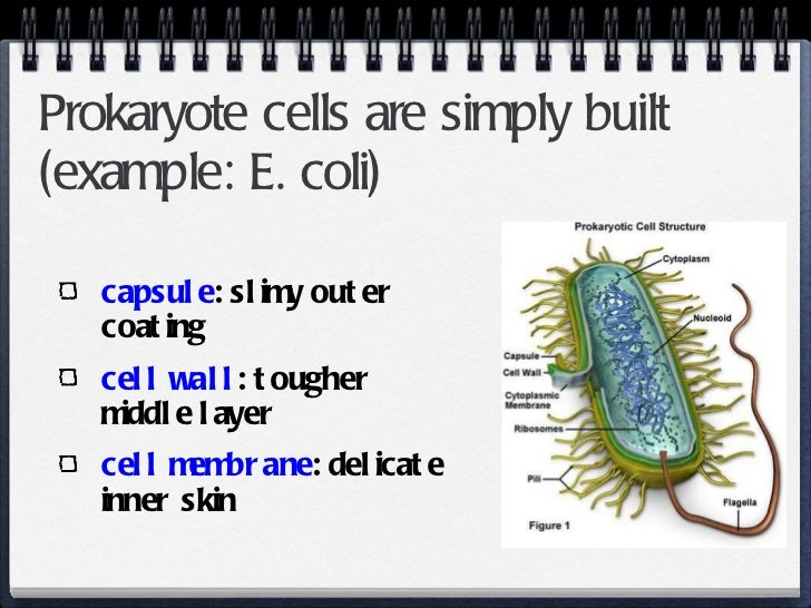 Prokaryotes And Eukaryotic Cell