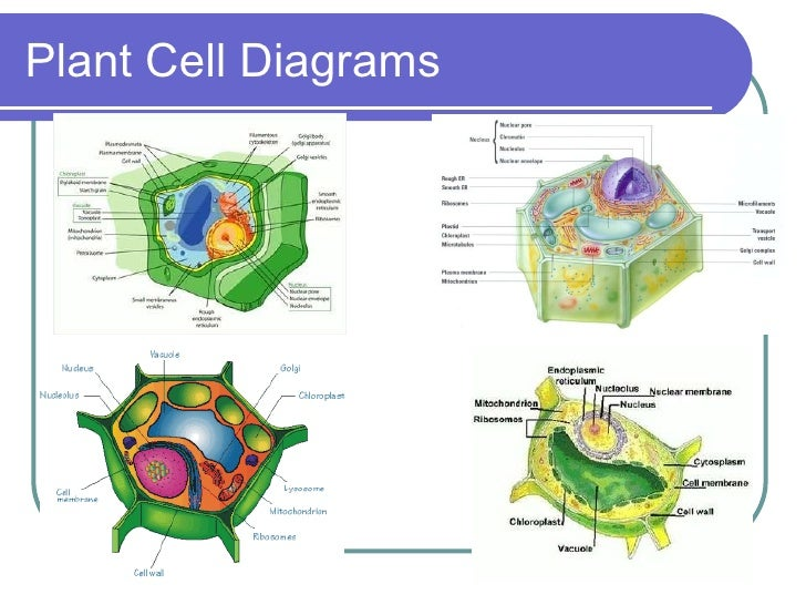 Cells and their organelles