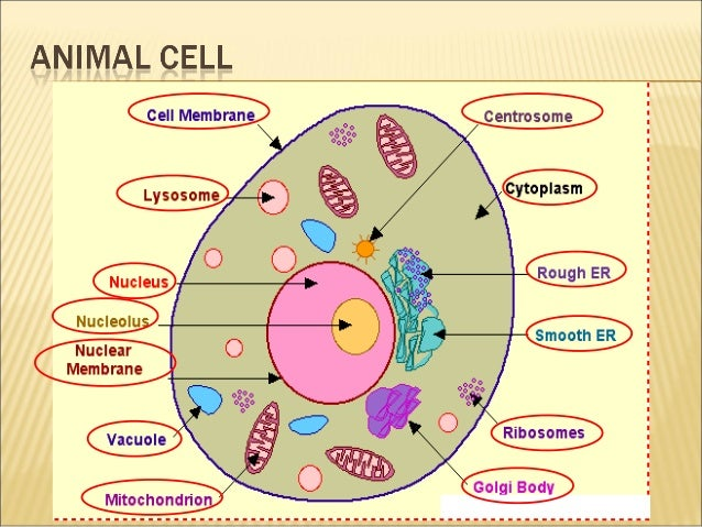 Grade 7 cells functions of organels 1 2 3 7 13 12 11 10 9 8 4 5 6 ccuart Gallery
