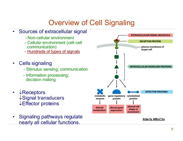 Cell signaling diagrams library of wiring diagram cell signaling diagrams circuit diagram symbols u2022 rh blogospheree com b cell receptor signaling articles cell signaling ccuart Gallery