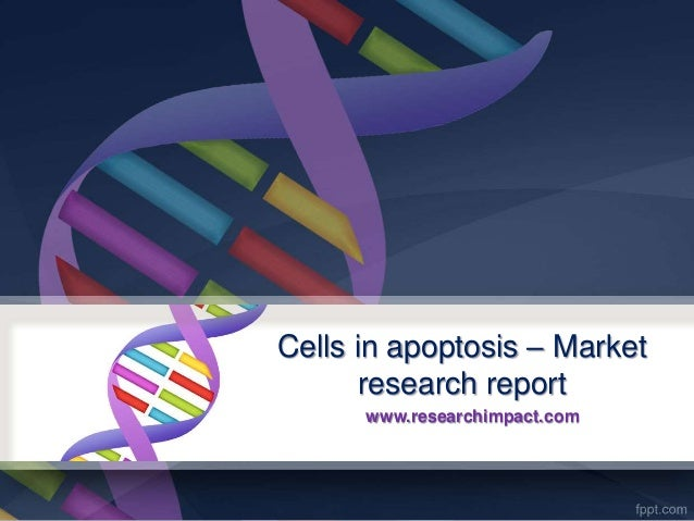 Cells in apoptosis – Market research report www.researchimpact.com