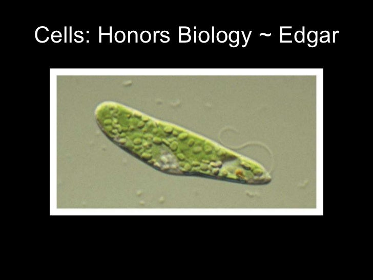 Cells: Honors Biology ~ Edgar