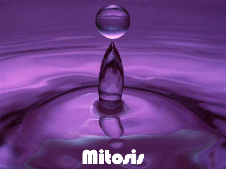 Mitosis<br />
