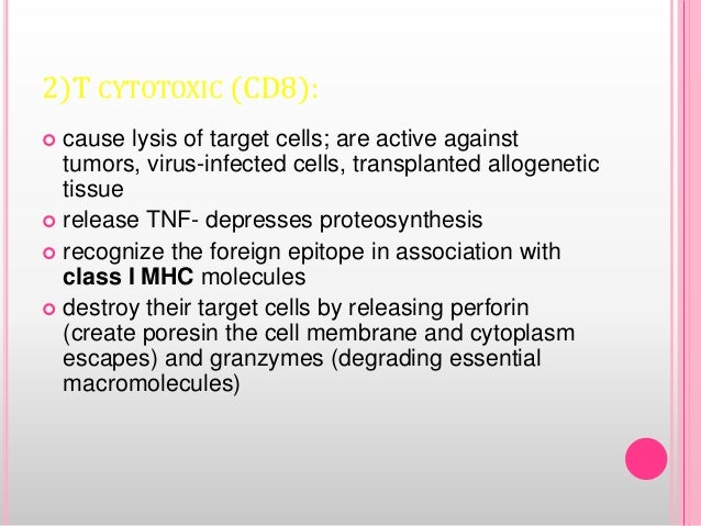2)T CYTOTOXIC (CD8):  cause lysis of target cells; are active against tumors, virus-infected cells, transplanted allogene...