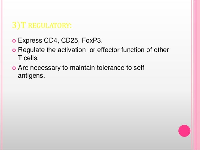 3)T REGULATORY:  Express CD4, CD25, FoxP3.  Regulate the activation or effector function of other T cells.  Are necessa...