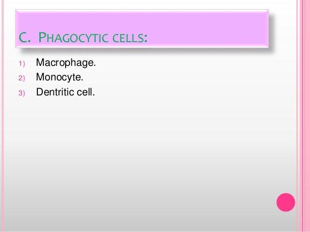 C. PHAGOCYTIC CELLS: 1) Macrophage. 2) Monocyte. 3) Dentritic cell.