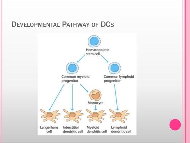 DEVELOPMENTAL PATHWAY OF DCS