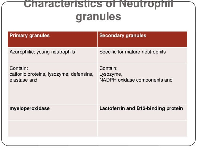 Characteristics of Neutrophil granules Primary granules Secondary granules Azurophilic; young neutrophils Specific for mat...
