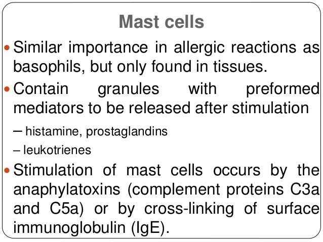 Mast cells  Similar importance in allergic reactions as basophils, but only found in tissues.  Contain granules with pre...