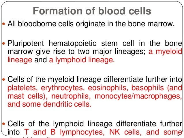 Formation of blood cells  All bloodborne cells originate in the bone marrow.  Pluripotent hematopoietic stem cell in the...