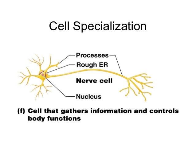 cells and cell specialization Cell membrane, cytomembrane, plasma membrane - a thin membrane (a double layer of lipids) enclosing the cytoplasm of a cell proteins in the membrane control passage of ions (like sodium or potassium or calcium) in and out of the cell all cells have a cell membrane.