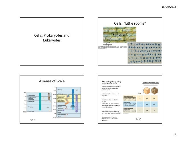 "16/09/2012                                                        Cells: ""Little rooms""       Cells, Prokaryotes and      ..."