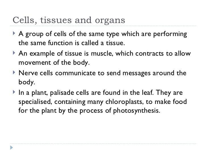 tissues and organs relationship