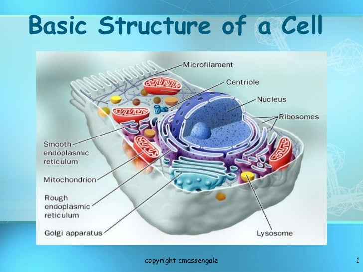 Basic Structure of a Cell copyright cmassengale