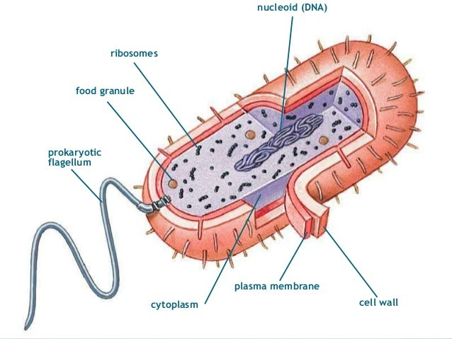 Eukaryotic cells example