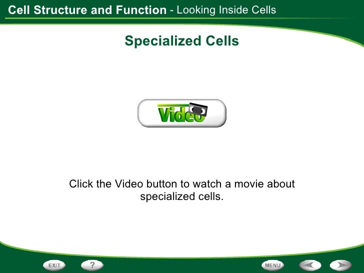 the cell in its environment worksheet answers kutshet – Cell Processes Worksheet