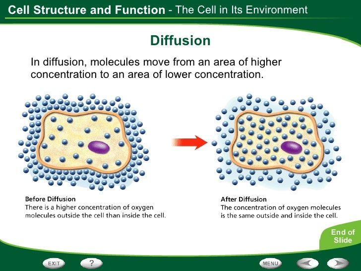 PPT - Chapter 4 Section 1 Photosynthesis PowerPoint Presentation ...