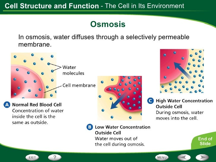 Unit 3: The Cell & Its Environment Ch 5: Inside The Cell. - ppt ...