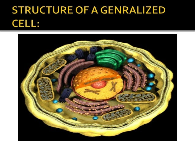 Cell structure and function (8th class portions)