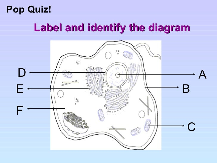 Cell structure and organisation label and identify the diagram pop quiz ccuart Image collections