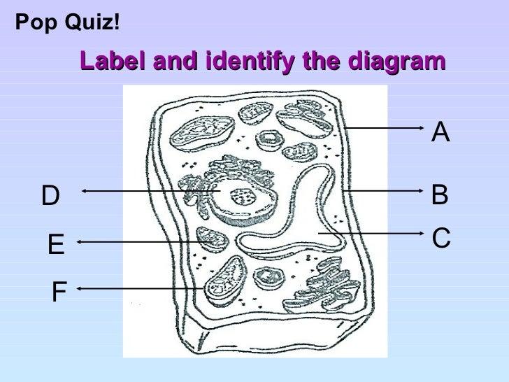 Label The Cell Diagram Quiz Diy Enthusiasts Wiring Diagrams