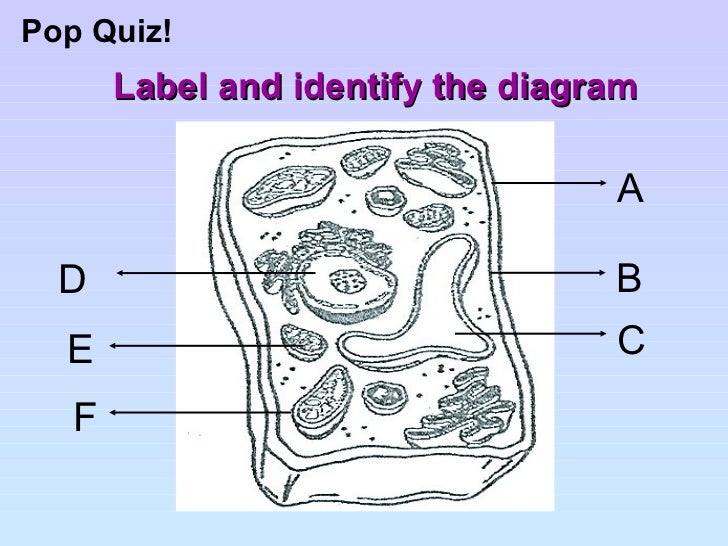 Cell structure and organisation label and identify the diagram a b c f d e ccuart Gallery