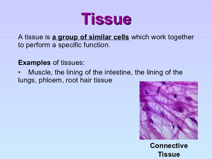 keystone topic 2 cells and cellular organization Living environment regents review questions by topic  ©2007 gregory arnold bchs topic 1b: cells & organelles page 4  11 describe how two of the cell structures listed below  (2) cell a to cell b because cell a is able to recognize signal 2 (3) cell b to cell a because cell a is able to recognize.
