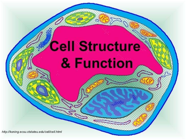 Cell Structure                                     & Functionhttp://koning.ecsu.ctstateu.edu/cell/cell.html