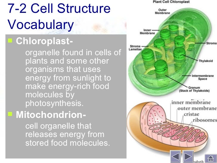 Cell structure function 16 ccuart Image collections