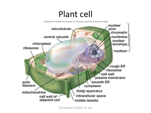 Plant cell structure labeled
