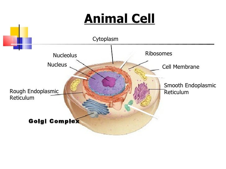 Cell structures functions and transport 11 ccuart Images