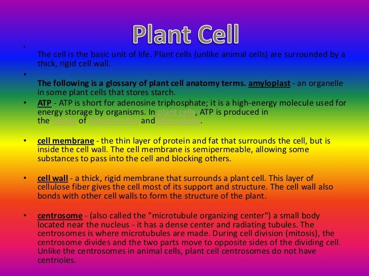 short story parts of a cell and functions Short story parts of a cell and functions different parts of a plant cell plant cells are classified into three types, based on the structure and function, viz parenchyma, collenchyma and sclerenchyma.