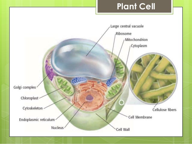 cell theory The cell theory is important because it defines what it means to be alive the three tenets of the cell theory are as follows: all living things are composed of one or more cells.