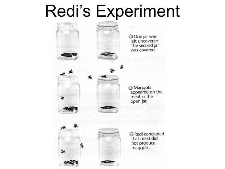 what were the possible conclusions reached from spallanzani s experiment Redi's experiment step 1 jar-1 left open maggots developed flies were observed laying eggs on the meat in the open jar.