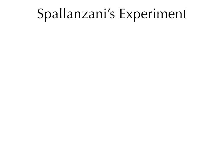 What were the possible conclusions reached from spallanzani s experiment